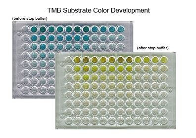 ELISA Plate With TMB Substrate