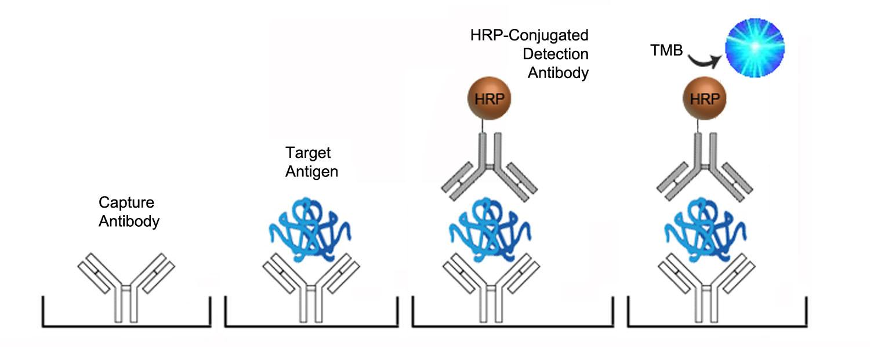 enzyme assay development
